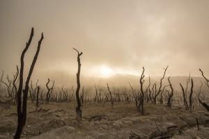 dead-trees-947331_640
