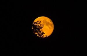 super-moon-966848_640